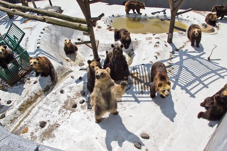 park niedźwiedzi noboribetsu hokkaido